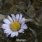 08-Marian ter Haar Vrije Opdracht 1