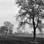 Wim-Halink-(2)