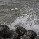 7-Bennie Kolkman-2017-04-27 zee golven