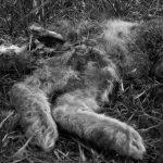 18-TT Dood in beeld-7465