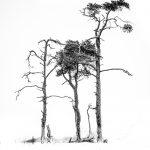 01-abstract Tonnie Schenk