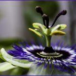 07-EstherGiesen natuur