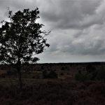 10-Angelique-minimalistisch landschap