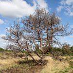11-Henk Woeltjes-minimaal landschap