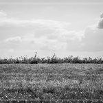 17-Marian-minimalistisch landschap