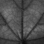 09-ingridnieuwenhuis-abstract
